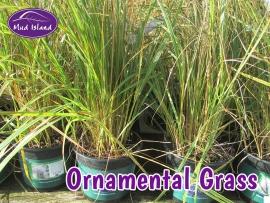 ornamental-grasses-3