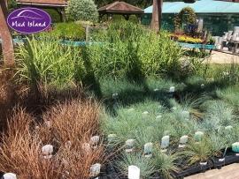 ornamental-grasses-9