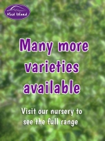 many-more-varieties