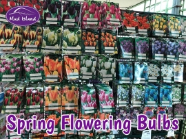 spring-flowering-bulbs-1