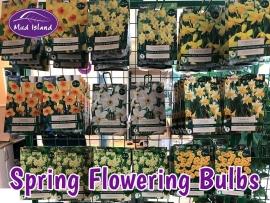 spring-flowering-bulbs-2
