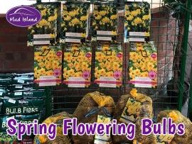spring-flowering-bulbs-3