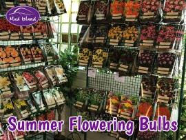 summer-flowering-bulbs-5