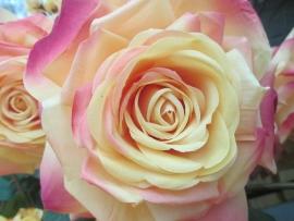silk-flower-shop-2