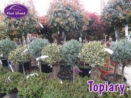 topiary-6