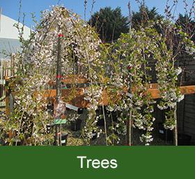 garden centre trees