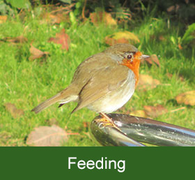 wildlife feeding