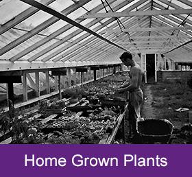 home grown plants