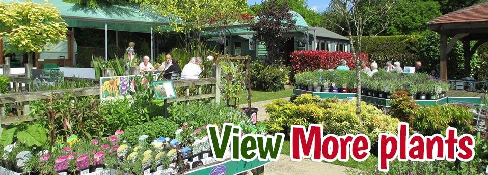 buy-plants-hampshire-garden