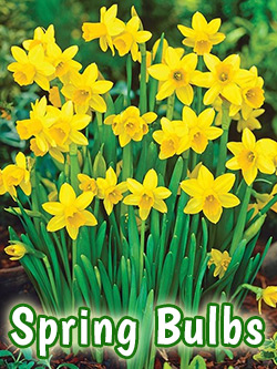 buy-spring-bulbs-hampshire-garden-centre