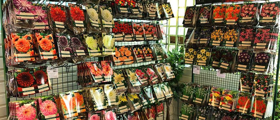 buy-summer-flowering-bulbs-hampshire