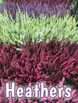 buy heathers hampshire garden centre